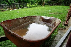 Mosquitoes breed in standing water, so get rid of any wet breeding grounds in your yard.